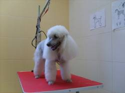 Veterinární klinika - stříhání psů