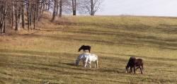 Turistický jezdecký klub Pensionu Grefenberg - Jeseník lázně