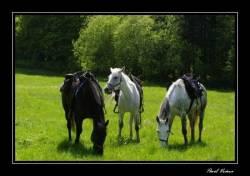 Ranch N-Břidličná