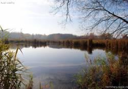 Vidnavské mokřiny - chráněná přírodní rezervace